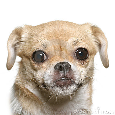 Free Little Fun Dog Face Stock Images - 8004154