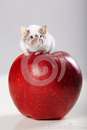 Free Little Funny Mouse On Big Red Apple Stock Photos - 29286833