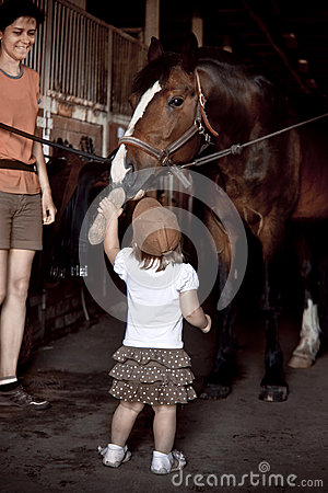 Free Little Girl Brushing Horse Royalty Free Stock Photo - 54001755