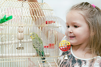 Little girl and budgie