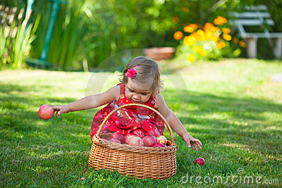 Little girl collects the apples