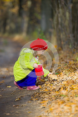 Little girl collects autumn leaves