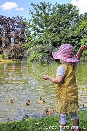 Little girl feeding ducks
