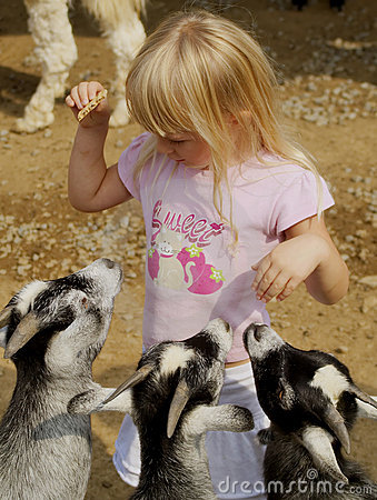 Free Little Girl Feeding Goats Royalty Free Stock Image - 1558706
