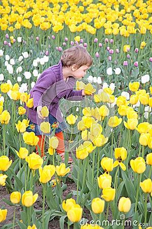 Little girl  on field of tulips
