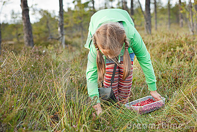 Little girl picking wild cranberries