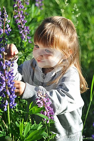 Free Little Girl Playing In Sunny Blooming Forest, Looking Out From Grass. Toddler Child Picking Lupine Flowers. Kids Play Outdoors. Su Royalty Free Stock Images - 95858699