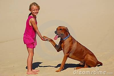 Little girl shaking dog paw