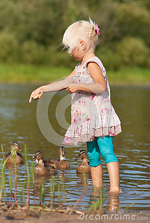 Little girl in water feeding ducks