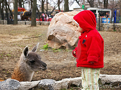 Little girl in a zoo and llama
