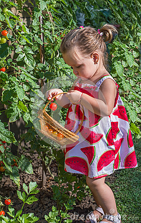 Free Little Girls Picked Tomatoes Royalty Free Stock Photo - 42881995