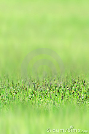 Little grass on green sward