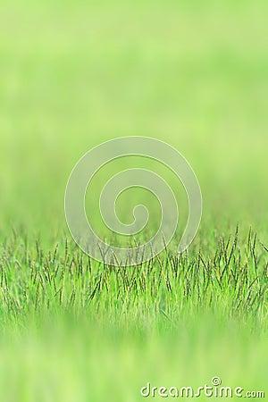 Little grass on green sward