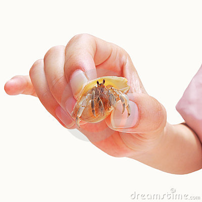 Little hermit crab in hand