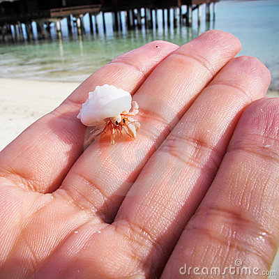 Little hermit crab on palm