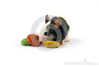 Mouse and rodent food isolate on white