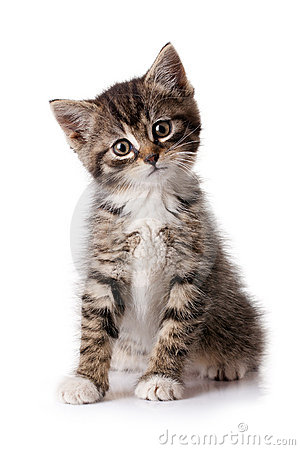 Free Little Kitten Stock Images - 15037384