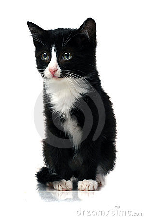 Free Little Kitten Stock Photography - 1837182