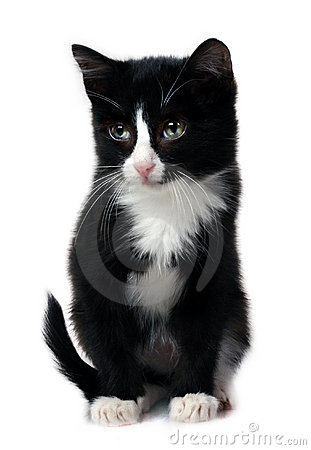 Free Little Kitten Royalty Free Stock Image - 1837226
