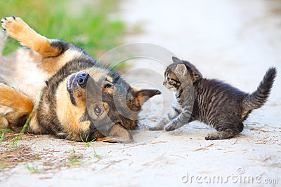 Stock photo little kitten and big dog