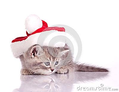 Little kitten in costume of santa claus