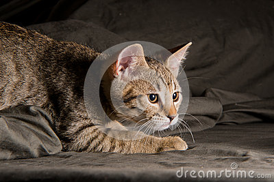 little kitten in a funny pose royalty free stock photos
