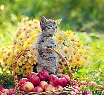 Free Little Kitten In A Basket Stock Photography - 50181382