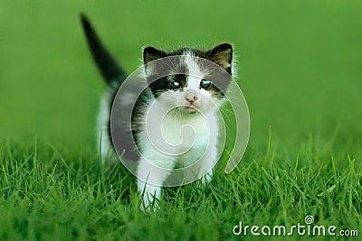 Little Kitten Outdoors in Natural Light