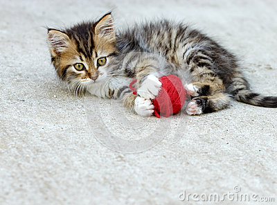 Little kitten playing
