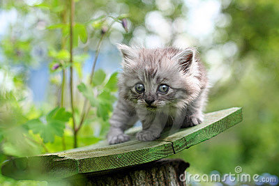 Little kitten in surprise, outdoor shot