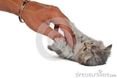 Little kitten who loves caress