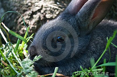Little mammal rabbit on a grass