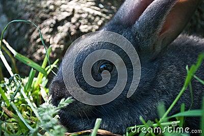 Little mammal rabbit on a grass
