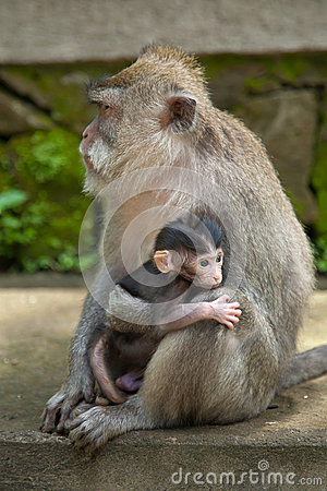 A little monkey baby and his mother