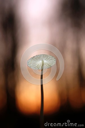 Free Little Mushroom In Evening Forest Royalty Free Stock Images - 114044069
