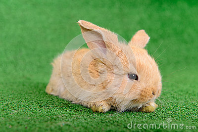 Little newborn rabbit