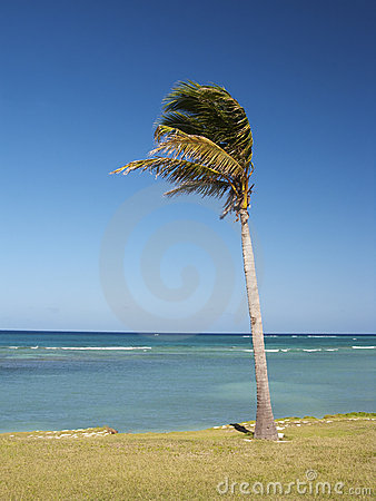 Little Palm tree and sea