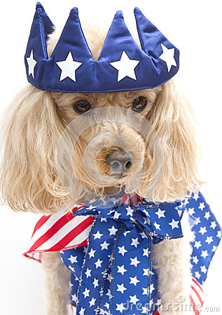 Little Patriotic Poodle