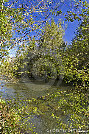 Little Pigeon River, Spring
