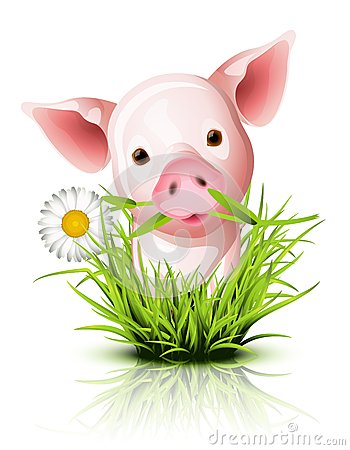 Little pink pig in grass