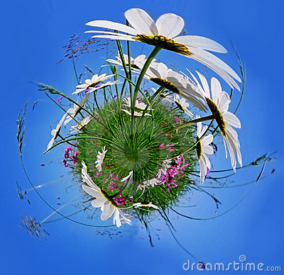 Free Little Planet With Flowers Stock Photography - 21024072