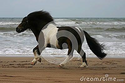 Little pony, big run
