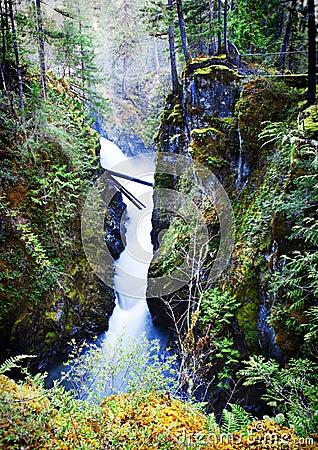 Free Little Qualicum Falls Provincial Park Royalty Free Stock Photo - 24615515