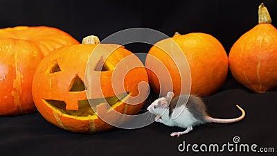 Jack O Lantern Eating Small Pumpkin