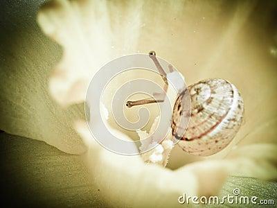 Little snail in flower