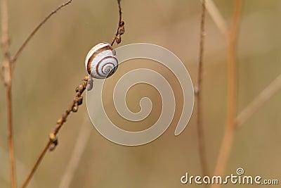 A little snail upon a stem