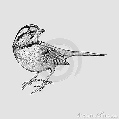 Free Little Sparrow Royalty Free Stock Photo - 46843455