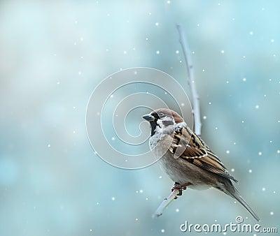 Little sparrow bird in winter