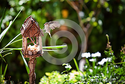 Little Sparrow in a Wooden House