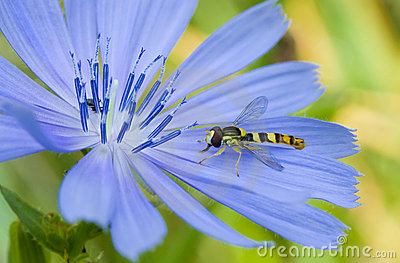 Little species of wasp